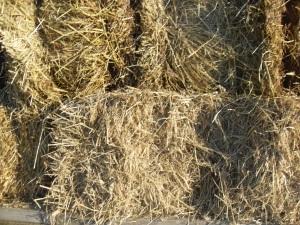 soil health, grassfed, pastured, sustainability, family farm, ethical land use,