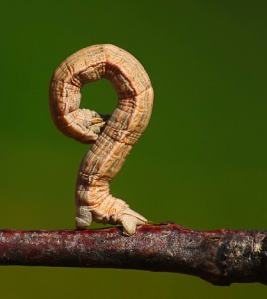 inchworm, questioning everything, appreciating the moment,