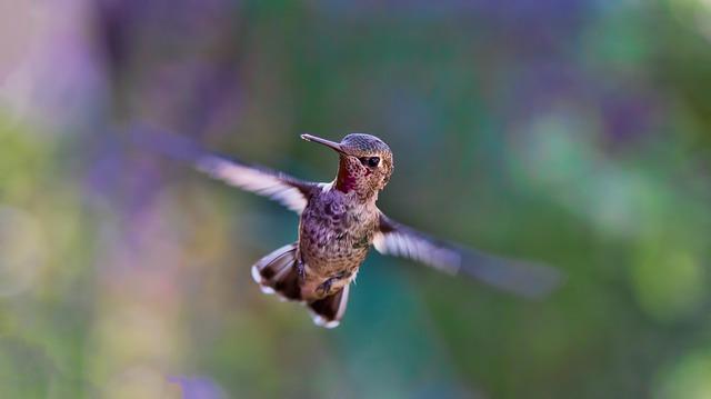 Hummingbird or Jackhammer: styles of full spectrum learning