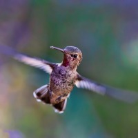 Are You A Jackhammer or a Hummingbird?