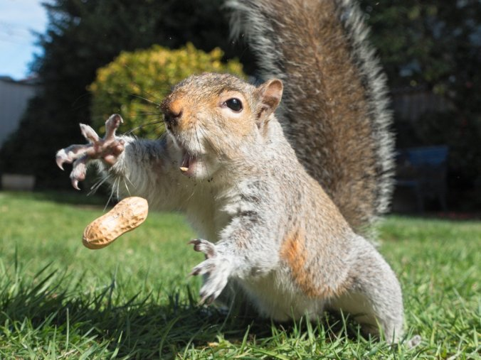 happiness is process not outcome - Pictures Of Squirrels
