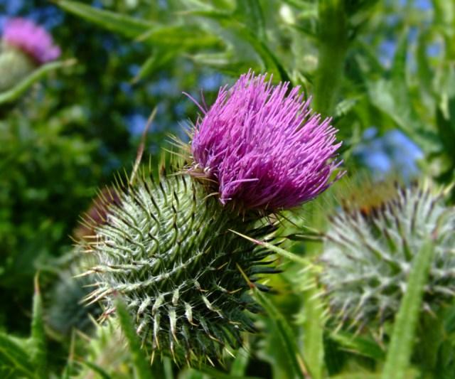 natural weed control methods, benefits of weeds